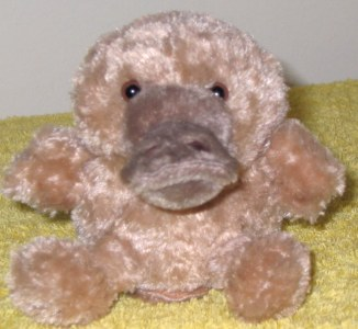 le platypus de duckbill