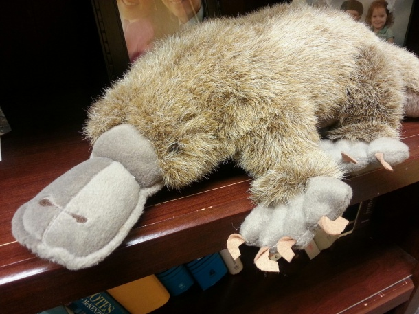 This is my pet platypus, my favorite stuffed animal who still has a head.
